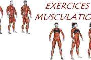 Exercices de musculation avec élastique
