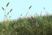 Créer de l'herbe